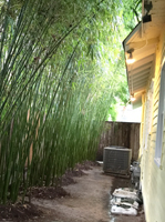 Houston bamboo thinning and pruning service