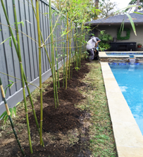 Houston Bamboo Privacy Fence Line