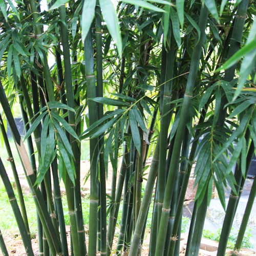 houston bamboo textilis bamboo