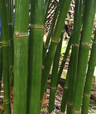 houston bamboo punting pole bamboo